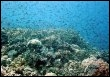 Des poissons sur une barrière de corail (© AFP/J. Cook University/Archives)