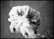 Première explosion nucléaire française le 13 février 1960 dans le désert du Sahara (© AFP/Archives)